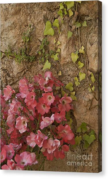 Roses In Spain Canvas Print