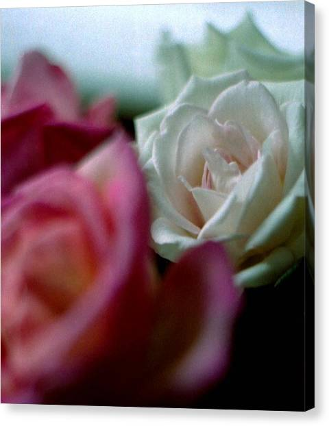 Canvas Print - Roses by Michael Morrison