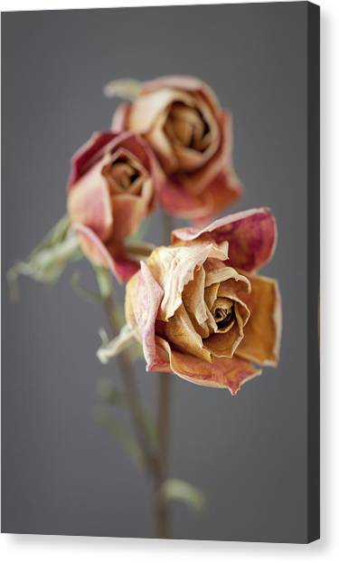 Canvas Print - Roses On Grey 02 by Richard Nixon