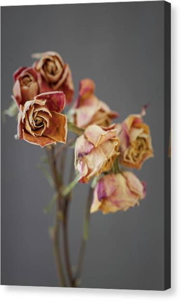 Canvas Print - Roses On Grey 03 by Richard Nixon