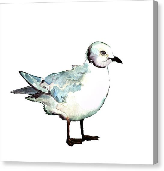 Ross's Gull Canvas Print