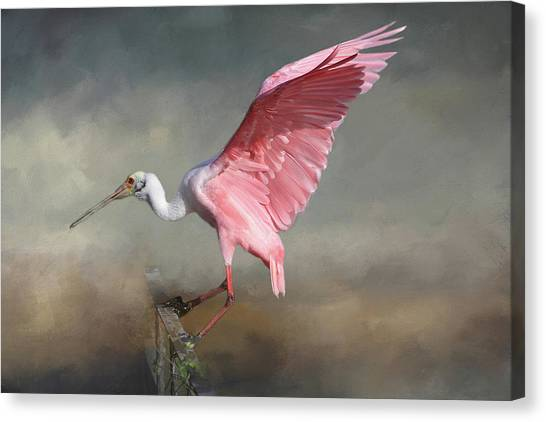 Spoonbills Canvas Print - Rosy by Donna Kennedy
