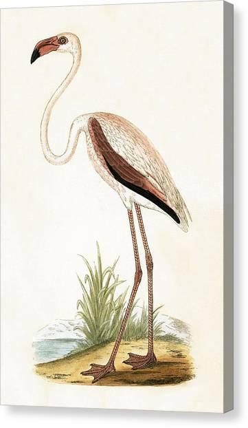 Flamingos Canvas Print - Rosy Flamingo by English School