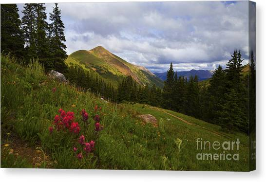 Rosy Paintbrushes Canvas Print
