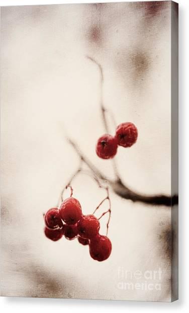 Rote Beeren - Red Berries Canvas Print