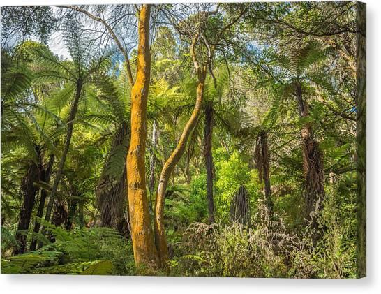 Rotorua Canvas Print - Rotorua Forest by Racheal Christian