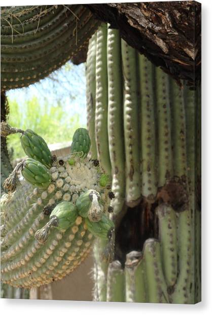 This Cactus Is Rotten To The Core Canvas Print