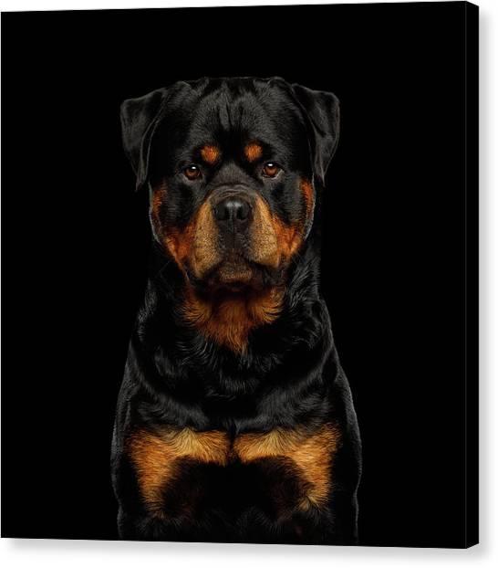 Rottweilers Canvas Print - Rottweiler by Sergey Taran