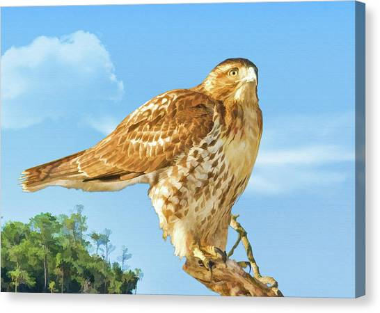 Rough-legged Perch Canvas Print by Delores Knowles