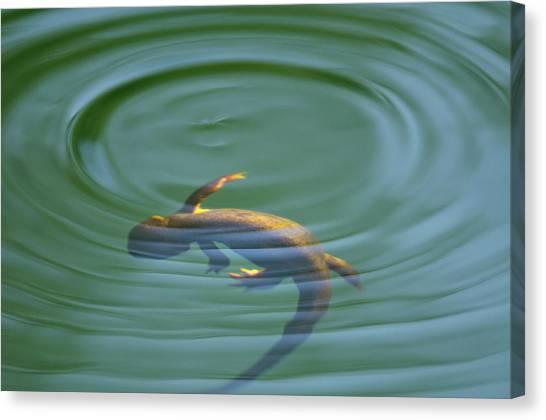 Waterdog Canvas Print - Rough Skinned Newt by Andrew Kumler