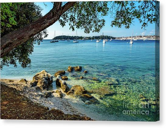 Rovinj Old Town, Harbor And Sailboats Accross The Adriatic Through The Trees Canvas Print