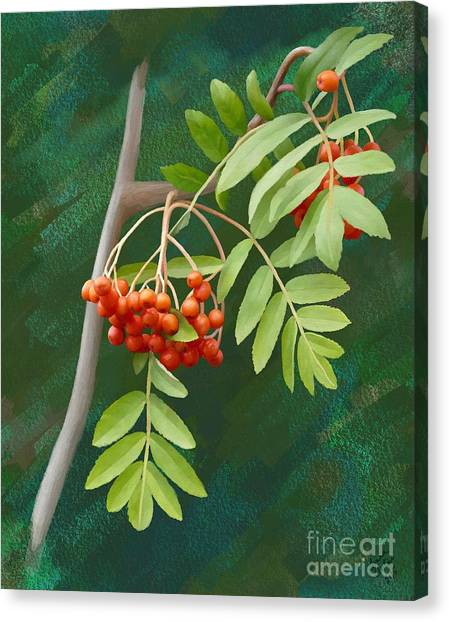 Rowan Tree Canvas Print