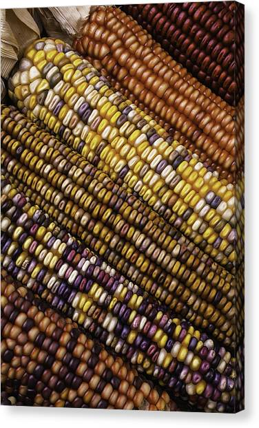 Indian Corn Canvas Print - Rows Of Indian Corn by Garry Gay