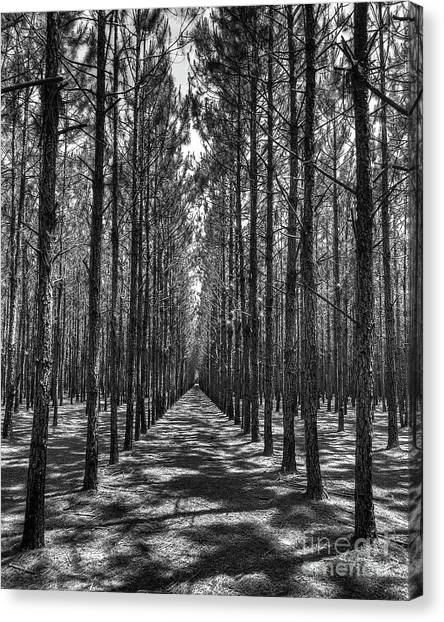 Rows Of Pines Vertical Canvas Print