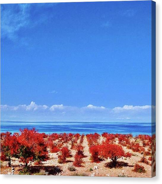 Orchard Canvas Print - Rows Of Red Bushes Lead Down To The by Untapped Travel
