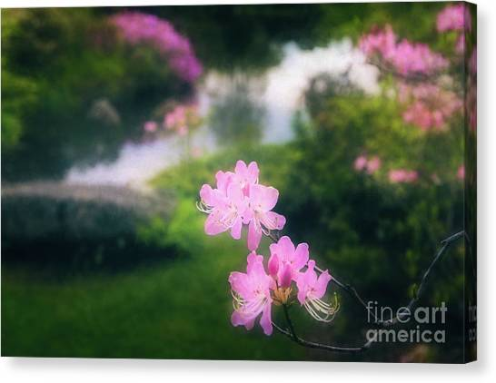 Royal Azaleas At Asticou Azalea Garden Canvas Print