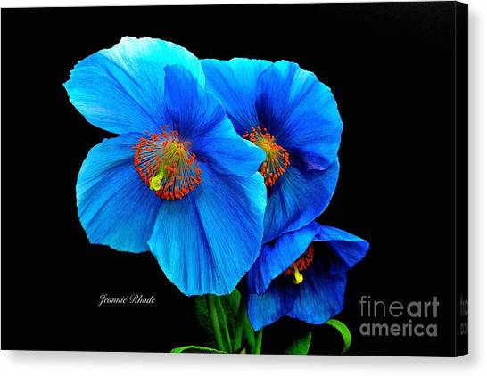 Royal Blue Poppies Canvas Print