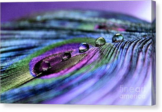 Peacock Canvas Print - Soul Reflections by Krissy Katsimbras
