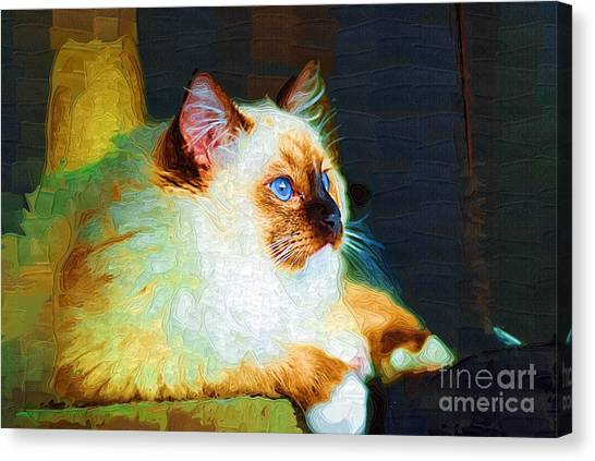 Himalayan Cats Canvas Print - Royal Kitty Kat by Deborah Selib-Haig DMacq