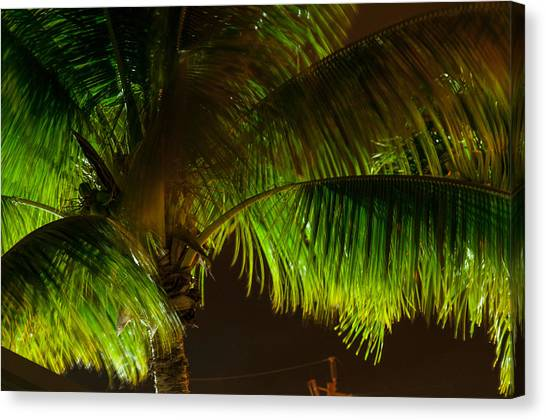 Royal Palm Night Out Canvas Print