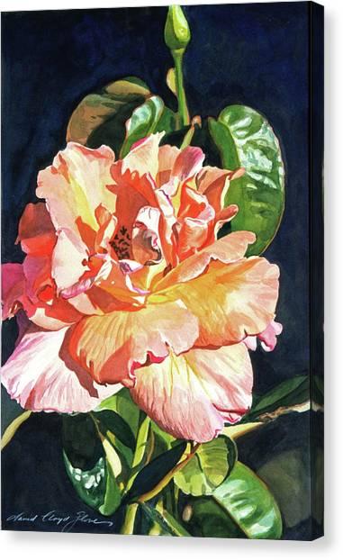 Watercolor Rose Canvas Print - Royal Rose by David Lloyd Glover