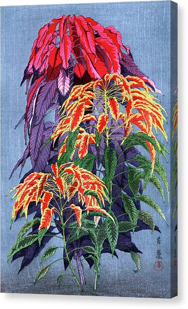 Roys Collection 6 Canvas Print