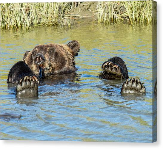 Bear Claws Canvas Print - Rub A Dub Dub A Bear In His Tub by Don Mennig