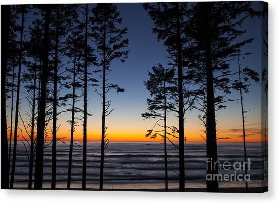 Ruby Beach Trees #4 Canvas Print