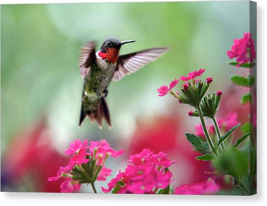 Colorful Bird Canvas Print - Ruby Garden Jewel by Christina Rollo