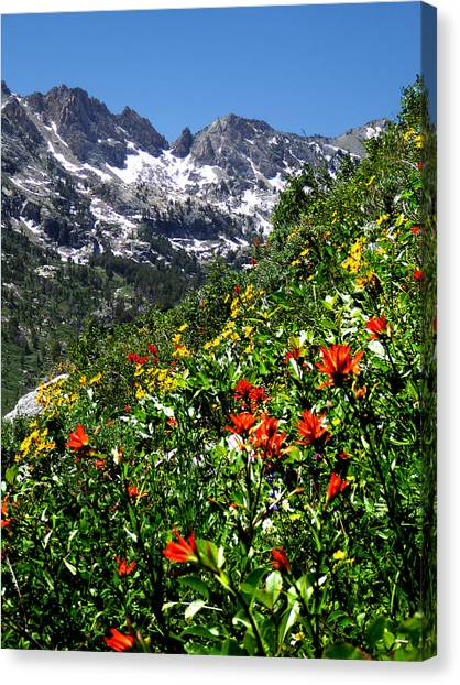 Ruby Mountain Wildflowers - Vertical Canvas Print