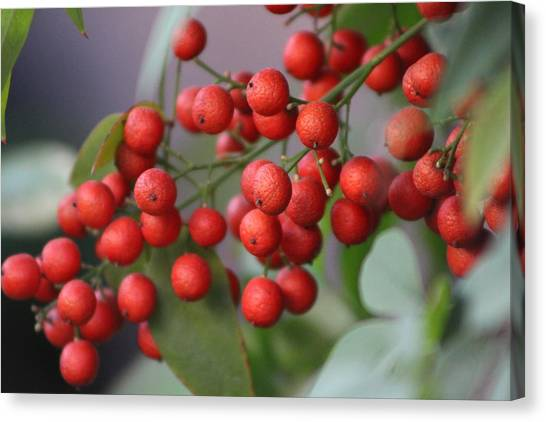 Ruby Red Berries Canvas Print