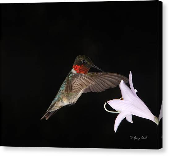 Ruby The Nectar Seeking Missile Canvas Print