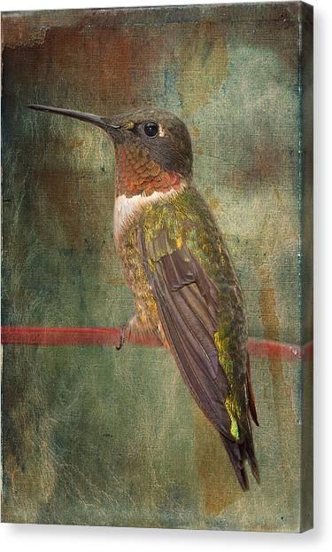 Ruby Throated Hummingbird Canvas Print