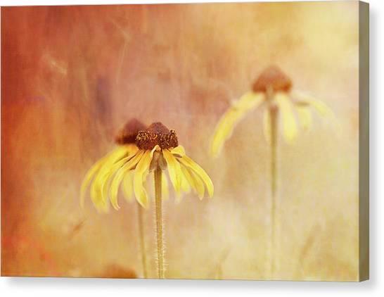 Susan Canvas Print - Rudbeckia Daydream by Susan Capuano
