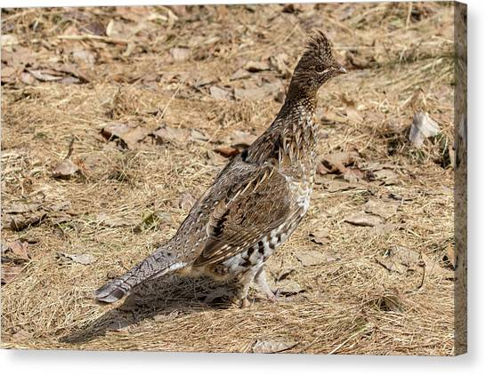 Canvas Print featuring the photograph Ruffed Grouse by Betty Pauwels