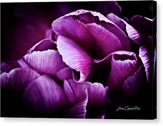Ruffled Edge Tulips Canvas Print