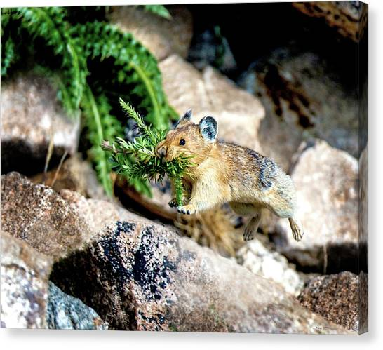 Run Run Little Pika Canvas Print