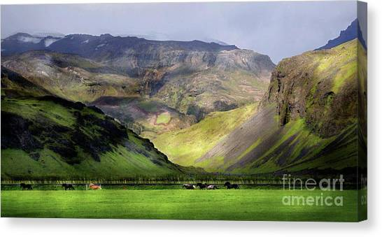 Running Horses Iceland Canvas Print