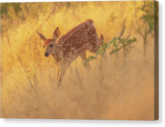 Canvas Print featuring the photograph Running In Sunlight by John De Bord