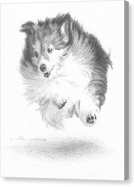 Running Sheltie Pencil Porrait Canvas Print by Mike Theuer