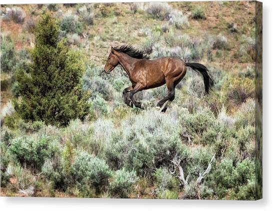 Canvas Print featuring the photograph Running Through Sage by Belinda Greb