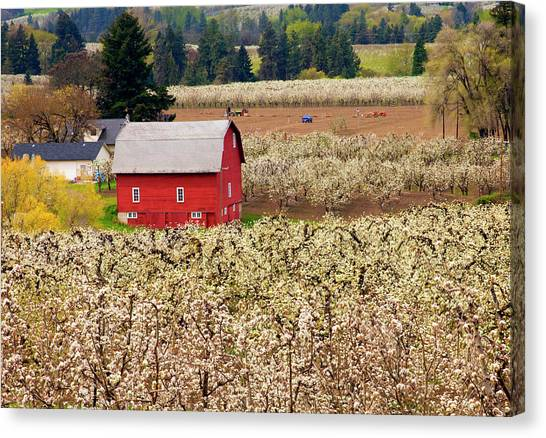 Fruit Trees Canvas Print - Rural Color by Mike  Dawson