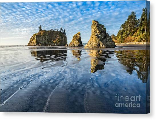 Olympic National Park Canvas Print - Ruby Beach Reflection by Jamie Pham