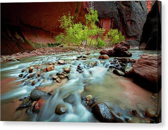 Metallic Canvas Print - Rush At Narrows by Edgars Erglis