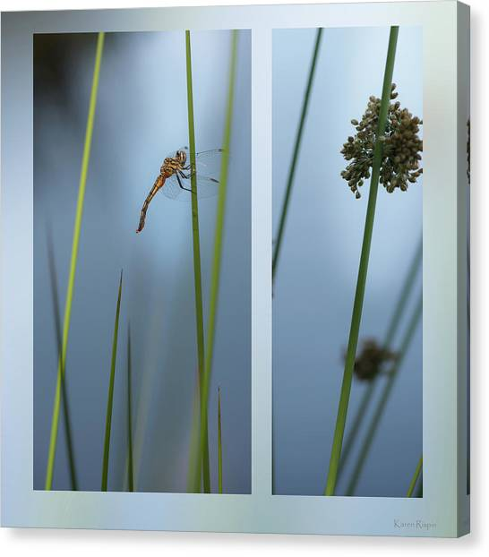 Rushes And Dragonfly Canvas Print
