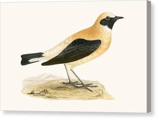 Flycatchers Canvas Print - Russet Wheatear by English School