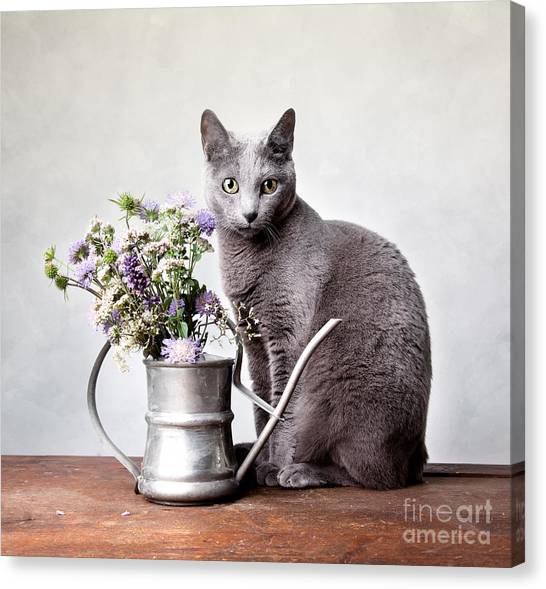 Cat Canvas Print - Russian Blue 02 by Nailia Schwarz