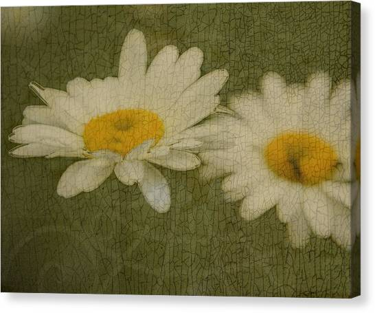 Rustic Daisies Canvas Print by Tingy Wende