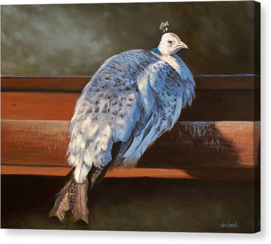 Rustic Elegance - White Peahen Canvas Print