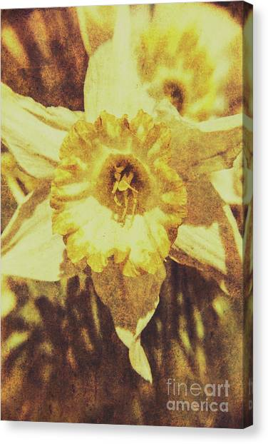 Daffodils Canvas Print - Rustic September by Jorgo Photography - Wall Art Gallery
